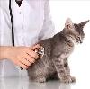Ветеринарные клиники в Красном Холме